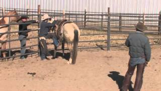 Bill Smith Colt Starting Clinic part 2